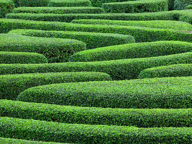 Green plant maze