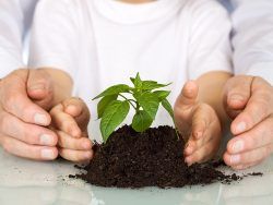 Plant a seedling today - environment and education concept with old and young hands protecting a nursling