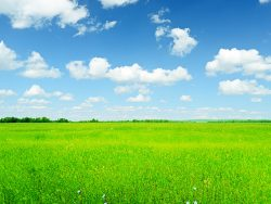 Summer landscape. Sky and green grass.