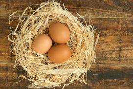 Eggs on nest