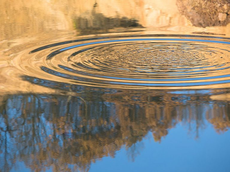 Rippled nature reflection on pond water surface