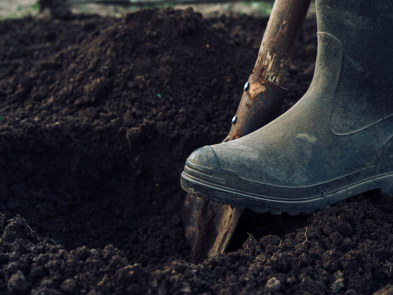 Unrecognizable man digs a hole by shovel in garden