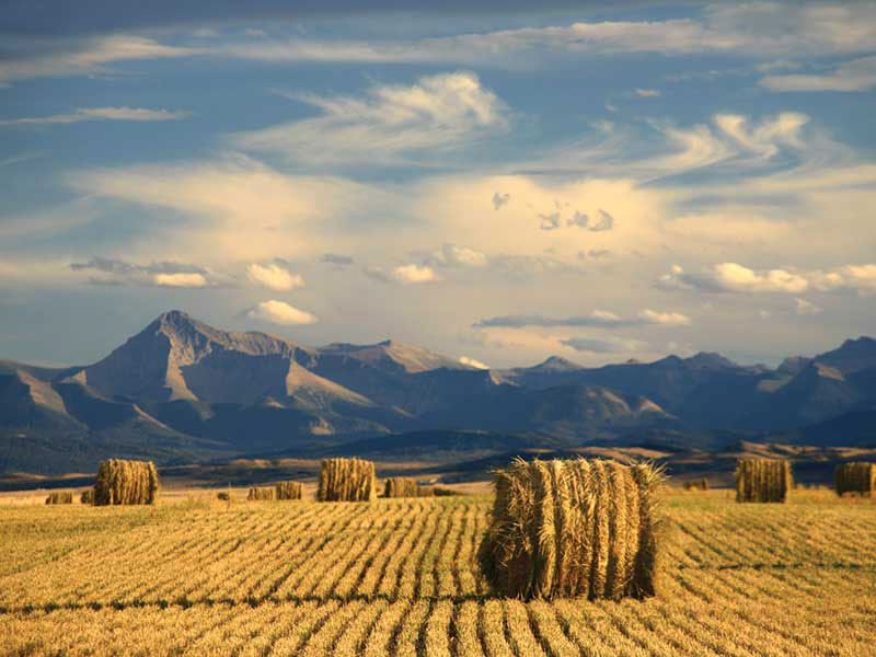 agriculture in Alberta