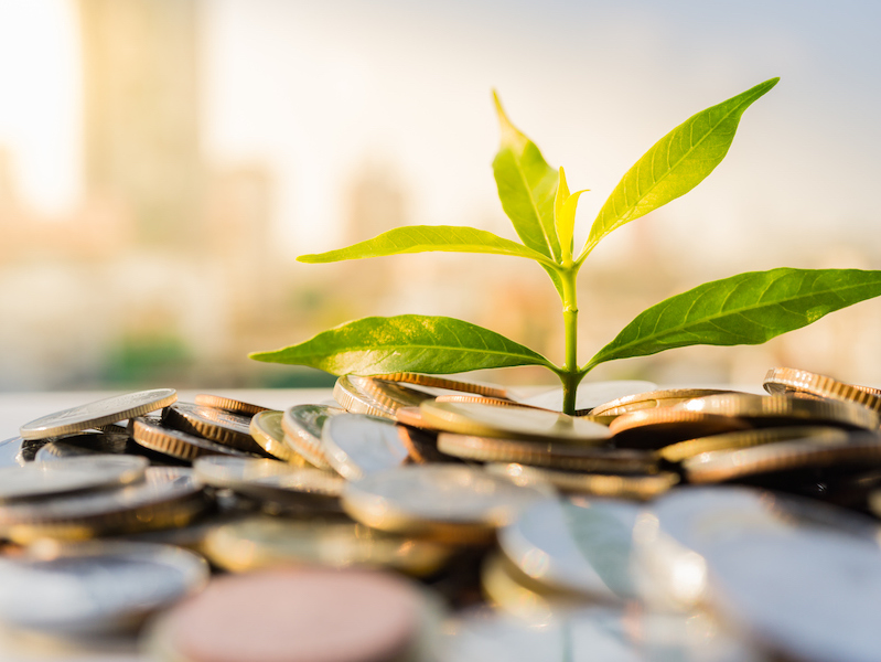 Young green plant growing out of coins